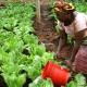 Città e alimentazione: la sfida per un futuro sostenibile