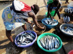 Sao Tomè, le palaiè (venditrici del pesce) si riforniscono di pesce appena pescato  (foto Giorgio Pagano)