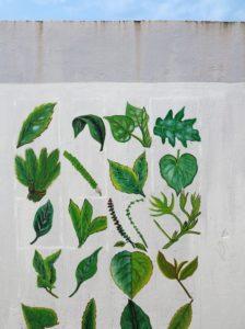 Sao Tomè, murale che raffigura le piante commestibili e medicinali   (foto Giorgio Pagano)