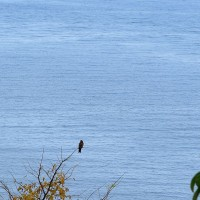 Neves,un falco a Mucumblì