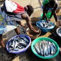 Sao Tomè,le palaié(venditrici di pesce)si riforniscono di pesce appena pescato